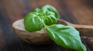 Базилик: что это за растение, как используется в качестве приправы и лечебного средства