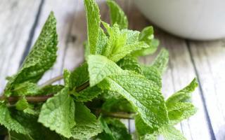 Чем полезна перечная мята: лечебные свойства и рецепты средств на основе ментоловой травы