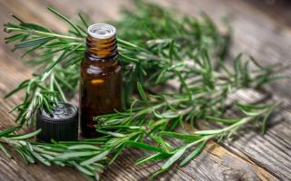 Свойства и применение эфирного масла розмарина