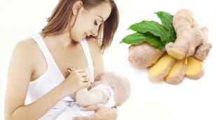 Имбирь при ГВ: можно или нельзя употреблять пряность и не навредит ли она маме и малышу