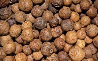 Душистый перец: что это такое, как он растет и какими полезными свойствами обладает