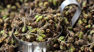 Орегано приправа – как зовется в простонародье и в приготовлении каких блюд используется