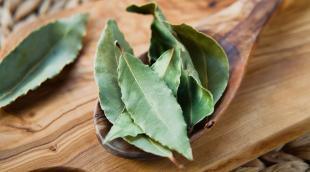Чем полезен лавровый лист: лечебные свойства пряных листочков и рецепты средств на основе лавра