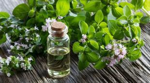 Эфирное масло орегано: полезные свойства эссенции и особенности использования