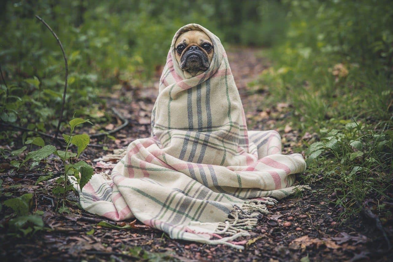 Масло гвоздики для собак